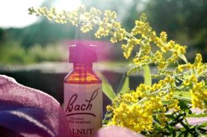 Originální lahvička Bachových esencí