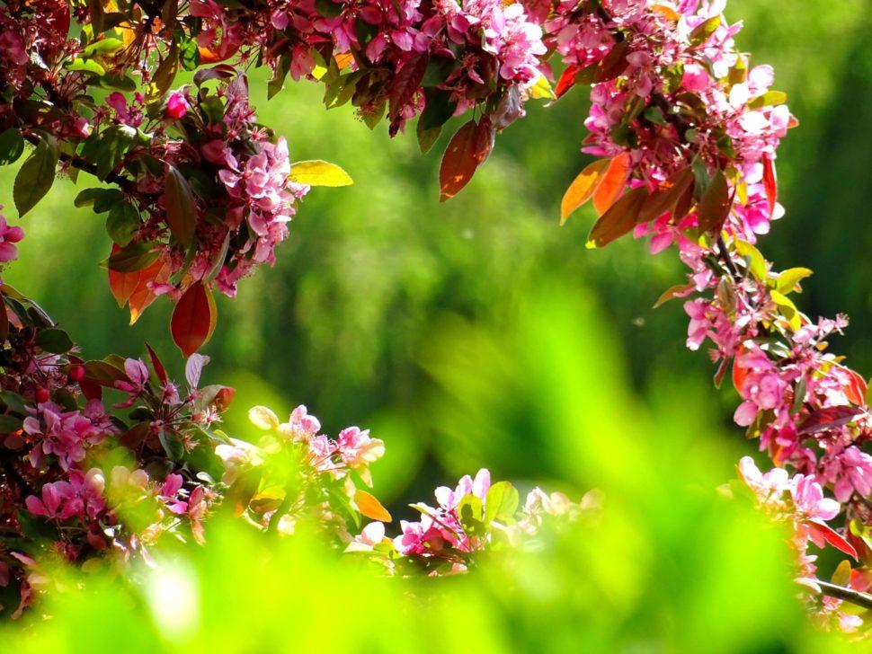 bachovy esence se získávají z květů rostlin